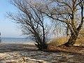 Cherkas'kyi district, Cherkas'ka oblast, Ukraine - panoramio (425).jpg