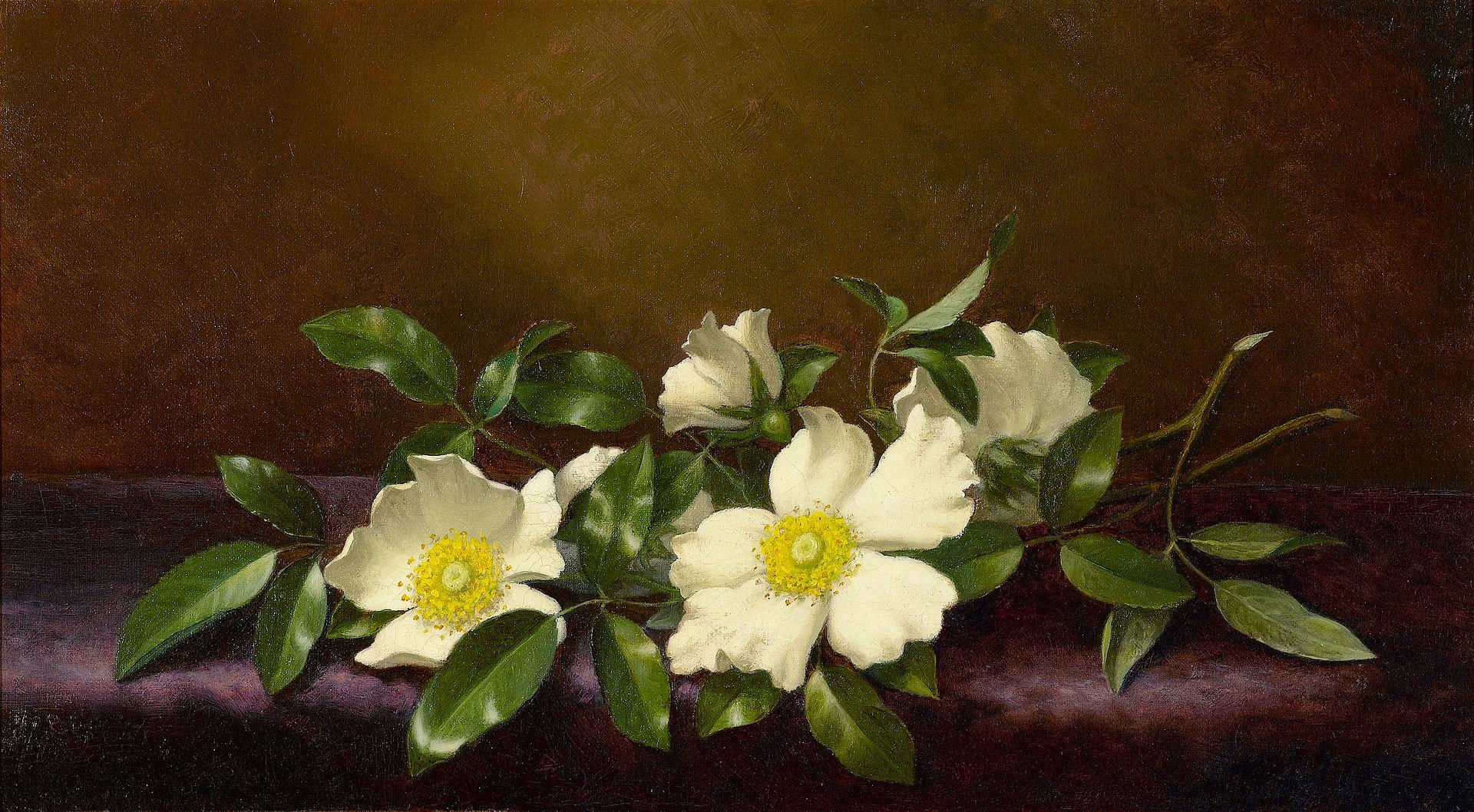 Розы Чероки на пурпурной ткани-Мартин Джонсон Heade-1894.jpg