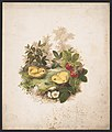 Chickens and strawberries - after Mrs. O.E. Whitney. LCCN2016652310.jpg