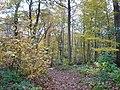 Church Wood footpath near Rough Common - geograph.org.uk - 1034635.jpg