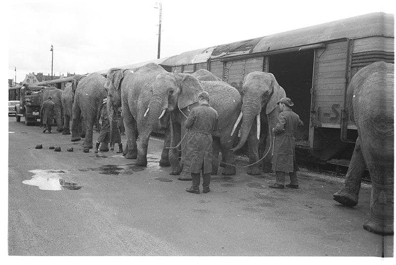 File:Circus Krone (Kiel 36.102).jpg
