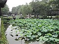 Classical Gardens of Suzhou-111927.jpg