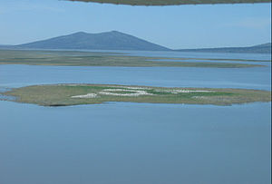 Modoc County, California - Image: Clear lake nwr nesting island
