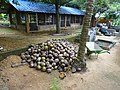 Click from a Farm, Kerala DSC00399.JPG