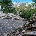 Coba - panoramio (13).jpg