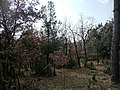 Collepardo, la natura d'inverno - panoramio.jpg
