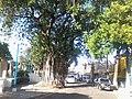 Colonia Santa Lucia, San Salvador, El Salvador - panoramio (19).jpg