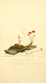 Coloured Figures of English Fungi or Mushrooms - t. 197.png