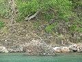 Columnar Basalt - panoramio (1).jpg