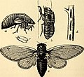 Comparative zoology, structural and systematic - for use in schools and colleges (1883) (20483055918).jpg