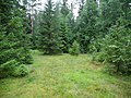 Coniferous forest in Sweden near the Svartälven river 07.jpg