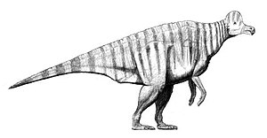 Corythosaurus - Restoration of C. casuarius