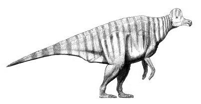 Corythosaurus restoration