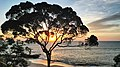 Coucher de soleil avec un arbre Terminalia en bordure de plage à Nyonié Gabon.jpg