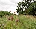 Cow pastures lane. - geograph.org.uk - 529227.jpg