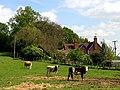 Coxland Cottages - geograph.org.uk - 7342.jpg