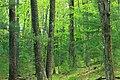 Cranberry Swamp Natural Area (25) (18102314645).jpg