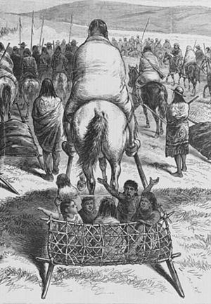 Baby transport - A travois being used to transport infants