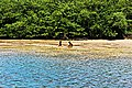 Crianças brincando no manguezal.jpg