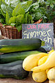 Cucurbita pepo summer squash First Root Farm CSA Fifth Pickup -8.jpg