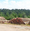 Cut logs in a lay-by - geo.hlipp.de - 40149.jpg