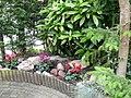 Cyclamen in de tuin - panoramio.jpg