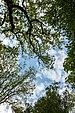Dülmen, Naturschutzgebiet -Franzosenbach- -- 2014 -- 0037.jpg