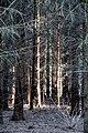 Dülmen, Wildpark -- 2011 -- 2586.jpg