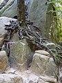 DSCN0847 Скелі Довбуша.jpg