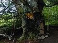 DSCN6210 Helensburgh Duchess Wood Fairies Meeting Place.jpg