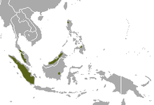 Dayak Fruit Bat area.png