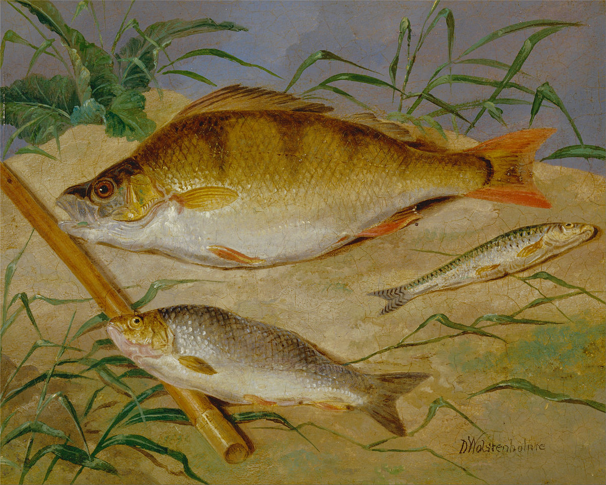 Freshwater fish england - Freshwater Fish England
