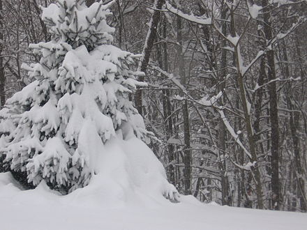 From December 18th to 19th, 2003, a significant snowstorm occurred in West Virginia. Dec 18th and 19th Significant Snowstorm in West Virginia 3.JPG