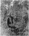 Deer damaged to trees planted in 1934 - NARA - 285986.tif