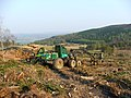 Deforestation - geograph.org.uk - 166611.jpg