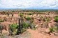 Desert (45363577054).jpg