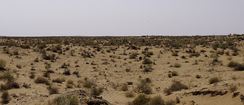 File:Desert Kyzyl Kum in Uzbekistan IGP2432.jpg
