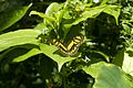 Detroit Zoo plants and butterfly (6086234957).jpg