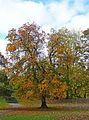 Devonshire Park 2 (4030098166).jpg