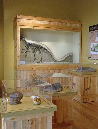 Morris Museum - Image: Digging Dinos MM