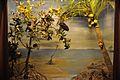 Diorama - Birds of Andaman Islands - Zoological Gallery - Indian Museum - Kolkata 2014-04-04 4400.JPG