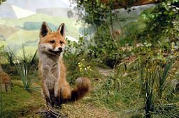 Diorama im Naturpark-Haus