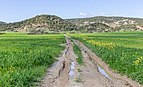 Dirt road, Karpaz, Northern Cyprus 12.jpg