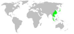 Distribution.liphistiidae.1.png
