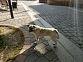 Dog in Pinsk 2.jpg