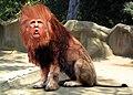 Donald Trump - King of the GOP Jungle (20478382821).jpg