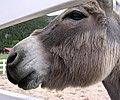 Donkey-04.jpg