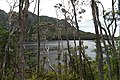 Dove Lake Circuit Walking Track, Cradle Mountain - Lake St Clair National Park 21.jpg