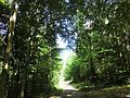 Dresdner Heide-Kannenhenkelweg 2016-022.5.jpg