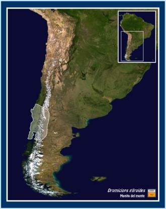 Monito del monte - Image: Dromiciops Gliroides MAD